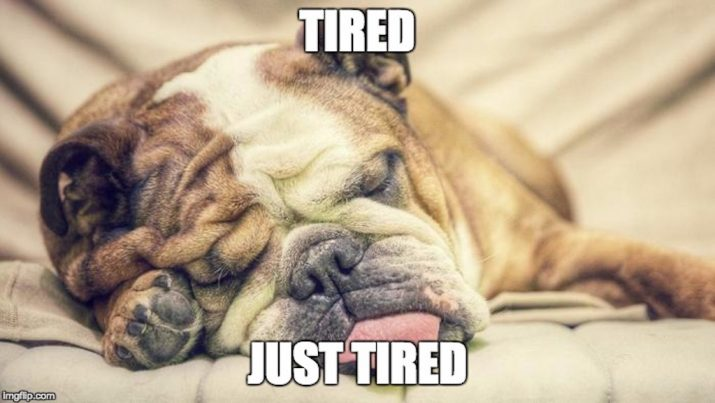 dog sleeping meme