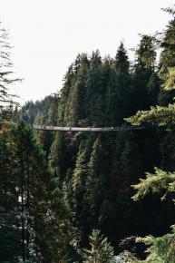 Vancouver - Capilano bridge