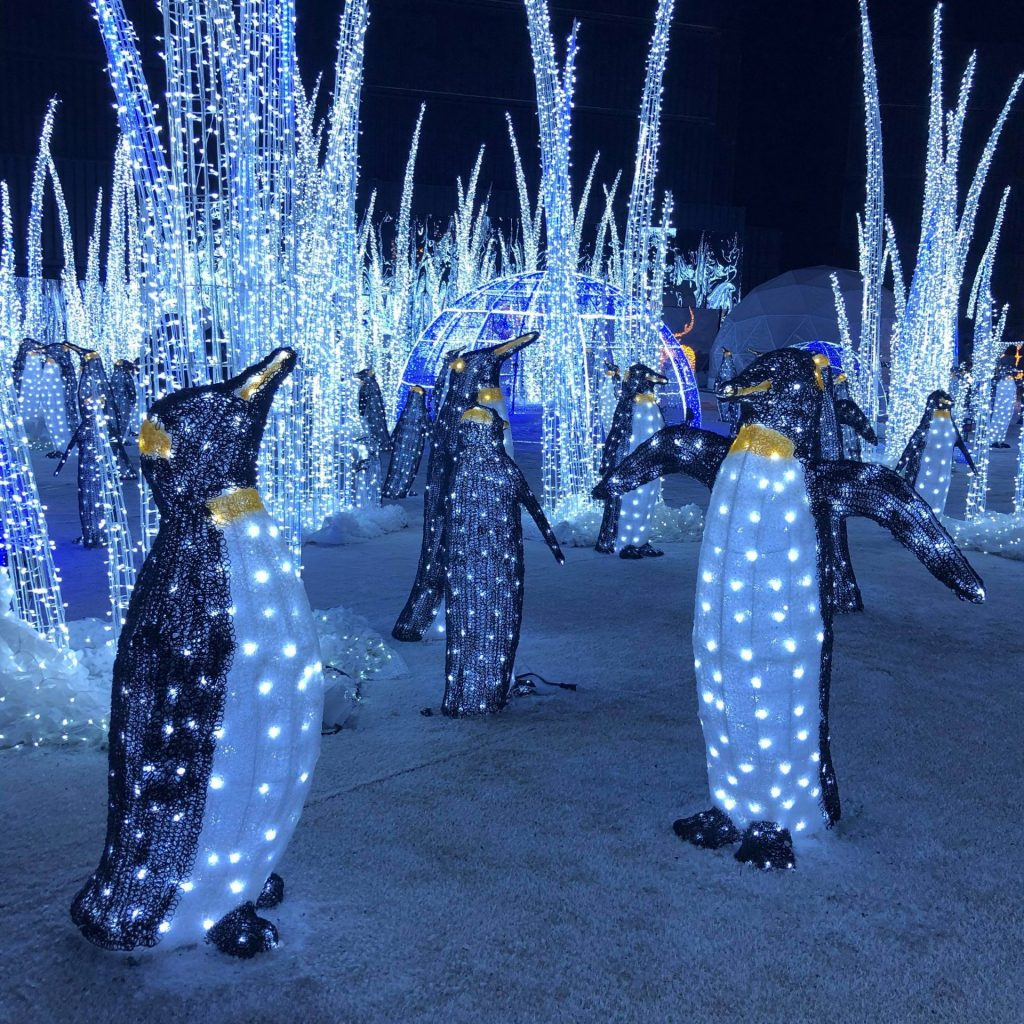 Illumi - pingouins