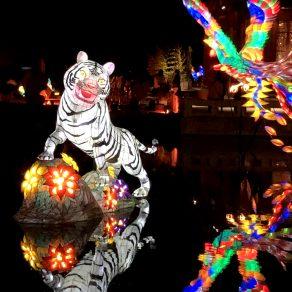 Jardin de Chine - Tigre Blanc